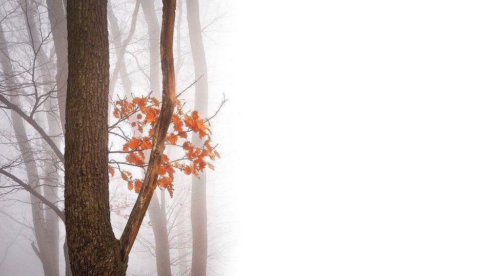 木枯らしは季語で季節は?意味や由来?木枯らし1号の条件や定義は?